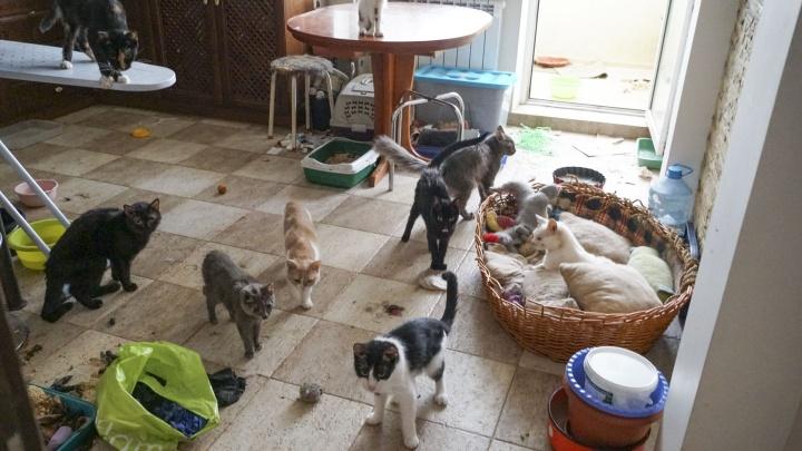 В Ростове вскрыли квартиру, где были заперты несколько десятков животных