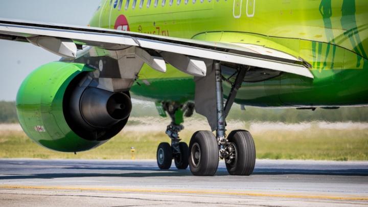 Снова S7: авиакомпания вернулась к своему названию после сбора денег на высадку деревьев