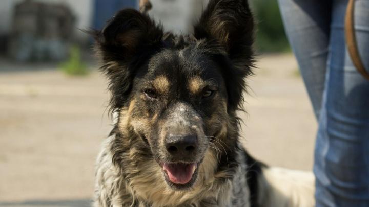 Собаку взяли из приюта, но вернули обратно из-за того, что пёс тосковал по другу