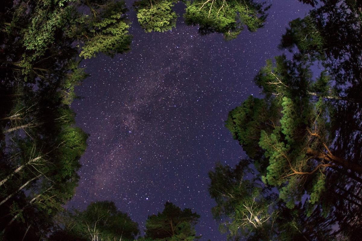 Снимок был сделан в лесу, недалеко от озера Иткуль