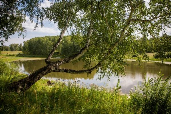 Небольшое озеро образовалось на речке Дедиха недалеко от села Каменка — сюда рыбаки приезжают за карасём и щукой