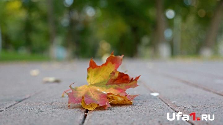 День, когда горят костры рябин: синоптики дали прогноз на 3 сентября