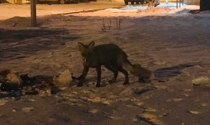 В Волгоградской области безжалостно расстреляют 10 лисиц