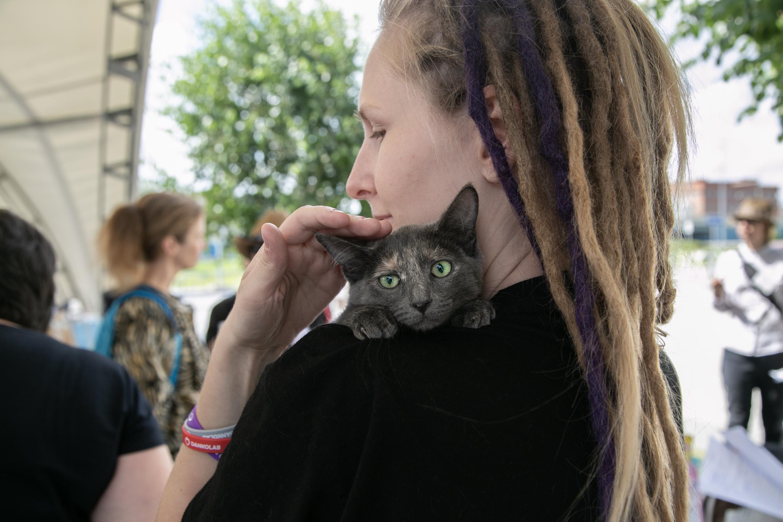 Жители города пришли, чтобы забрать бездомных животных