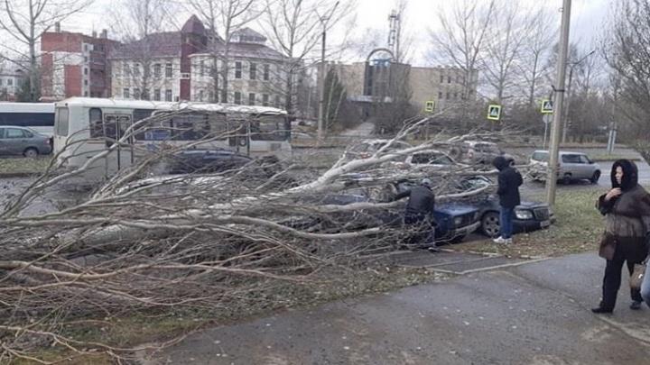 Огромное дерево упало на крыши припаркованных авто: двоим помогли спасатели