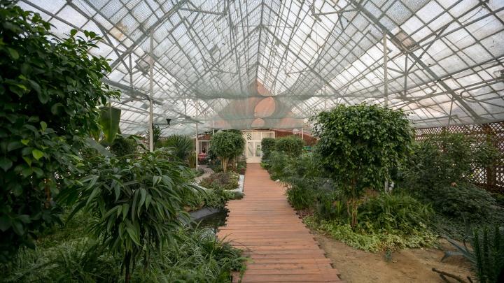 Когда хочется в лето: любуемся пальмами и кактусами из оранжереи Красноярска в 30-градусный мороз