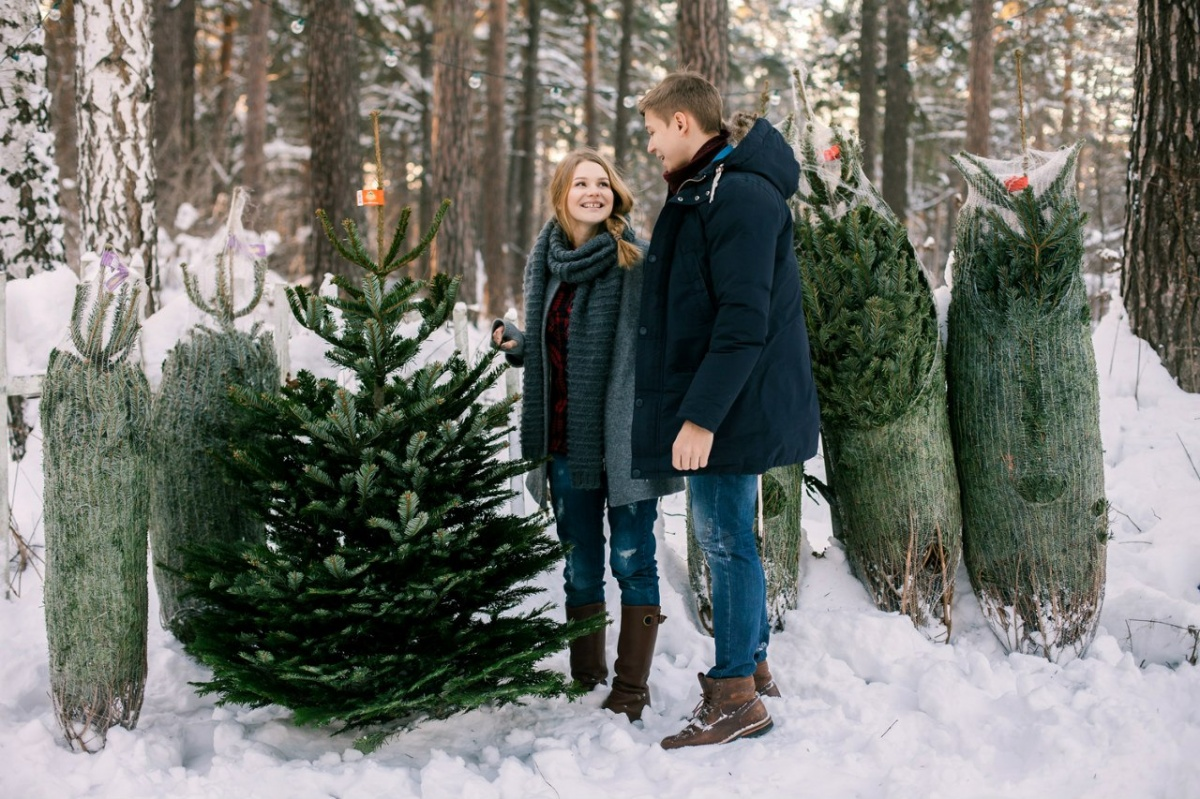 В Новосибирске стартовали продажи датских ёлок