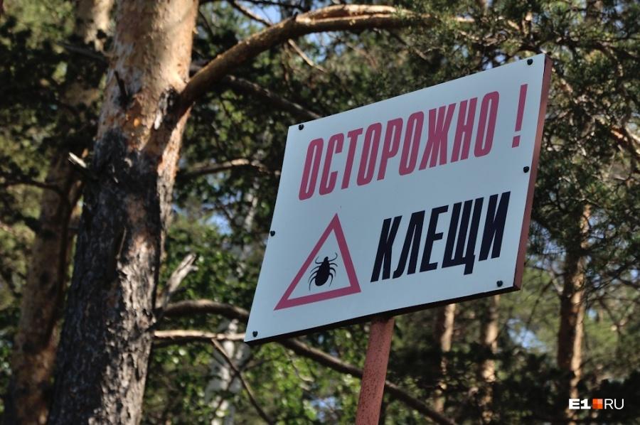 Число покусанных клещами граждан  Челябинской области перевалило задюжину