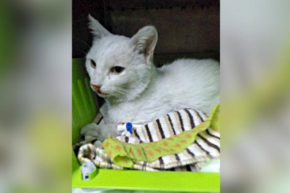 Кот умер от пулевых ранений в ветеринарной клинике