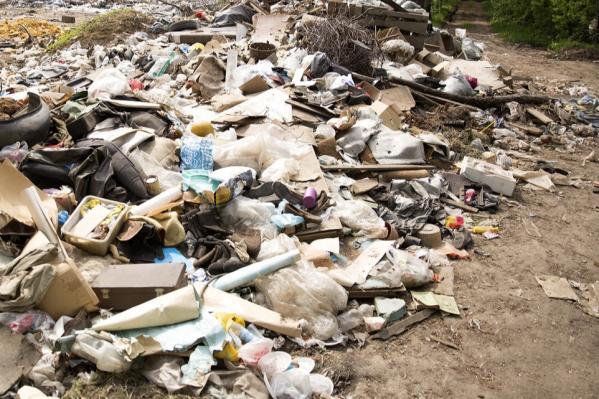 Расследованием занялся департамент охраны окружающей среды