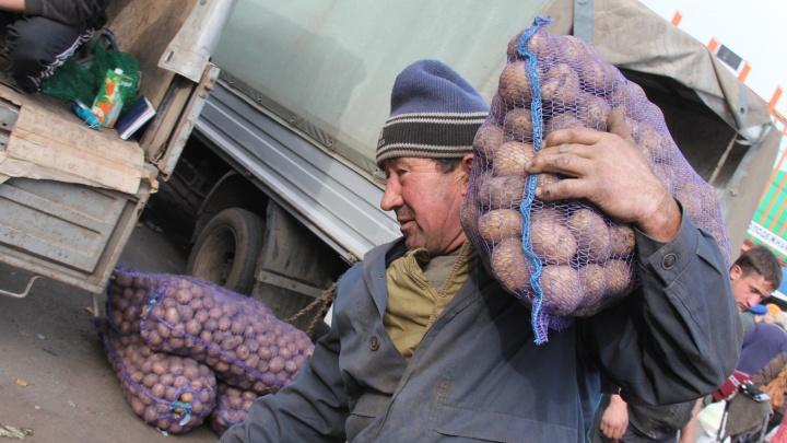 Мед, картошка и яблоки: в Уфе пройдут ярмарки выходного дня