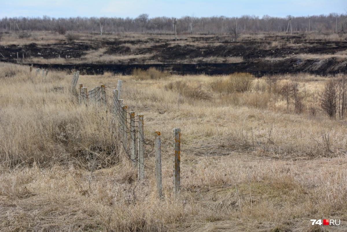 Старый забор около Течи — от него остались столбы с обрывками колючей проволоки