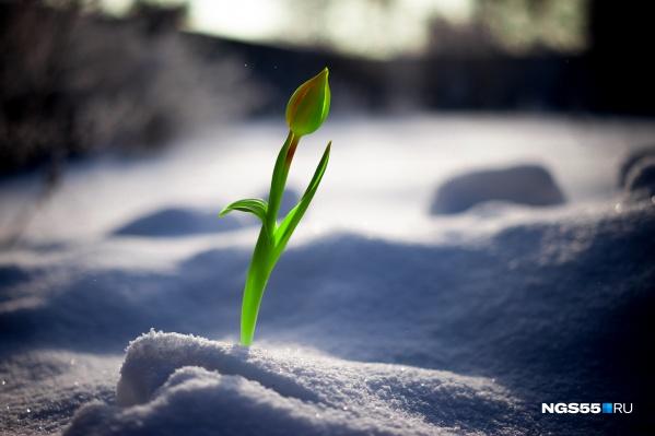 Не только в Ростове могут расти цветы зимой
