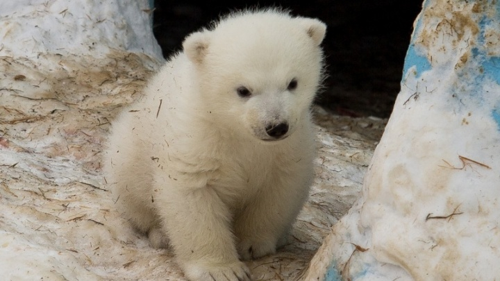 Названному в честь директора зоопарка медвежонку исполнилось два года
