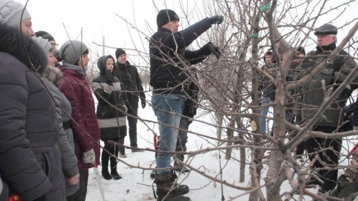 «Сады Придонья» готовят сады к новому сезону