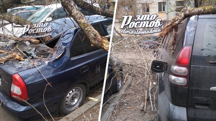 В Ростове упавшее дерево разбило четыре машины