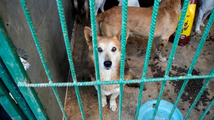 На Ленинском рынке начали собирать корм для отловленных бродячих собак