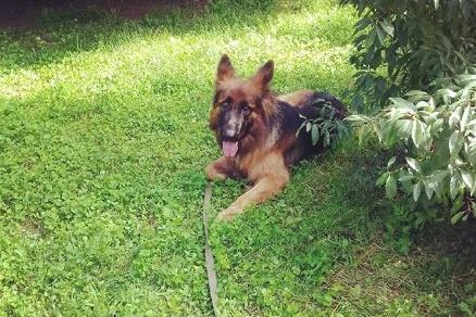 Новосибирцы могли сфотографироваться с понравившейся собакой за сто рублей