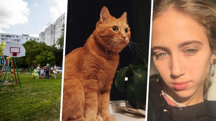Блогер извинился перед сибирячкой, которую обвинил в расправе над котом Мотей