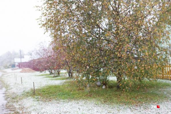На днях в Ярославле выпадет снег