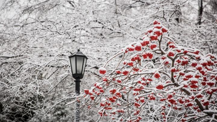 Снежная сказка: снегопад украсил ветки деревьев в Новосибирске