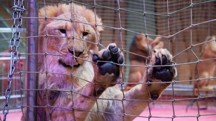 Один цирк — как 13 зоопарков: сравниваем цены билетов на детские развлечения в Екатеринбурге