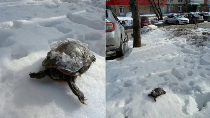 Пермяки пожаловались на мужчину, который выкидывает на улицу отданных «в добрые руки» животных