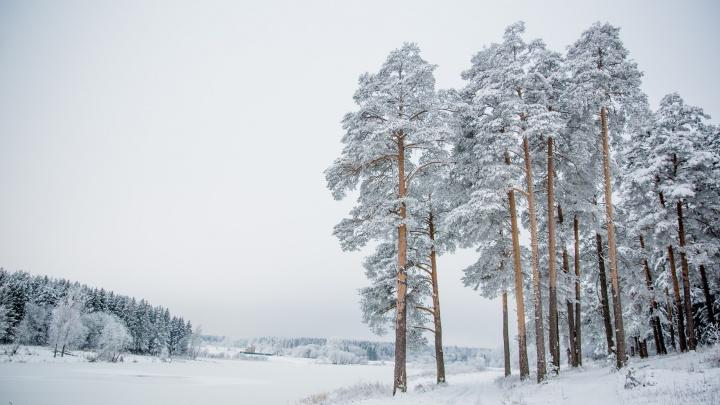 Мощное арктическое вторжение: на Центральную Россию идут декабрьские морозы