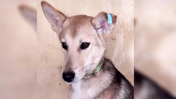 Хозяева выгнали ласковую собаку при переезде. Она каждый день возвращалась к дому
