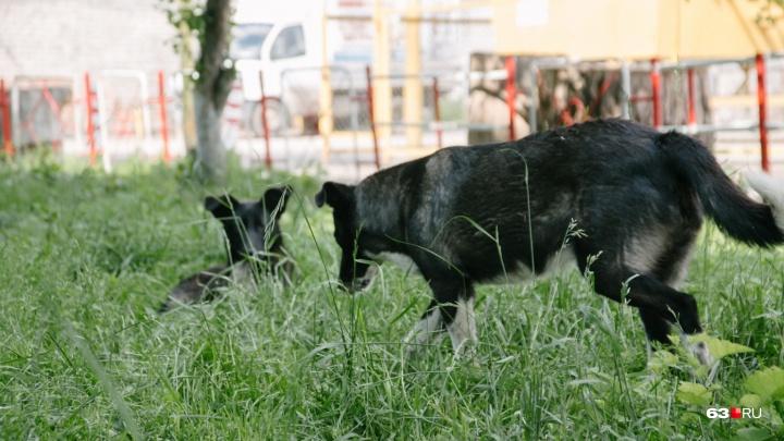 Обещали не стрелять: в Самаре пройдет зачистка улиц от бродячих животных