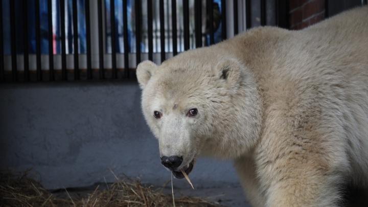 В зоопарке рассказали о судьбе безымянного медвежонка, спасенного из Диксона