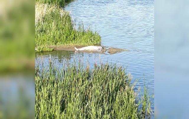 Откачивали минут 15: на северо-западе Челябинска в Миассе утонул мужчина