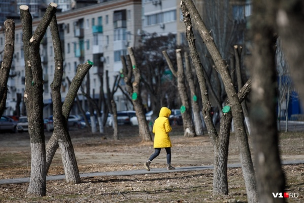 Мороз и ветер захватили Волгоград всего на пару дней