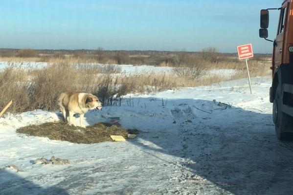 Незнакомые люди оказались добрее хозяев. Благодаря их помощи брошенный пес не умер от голода и не замерз