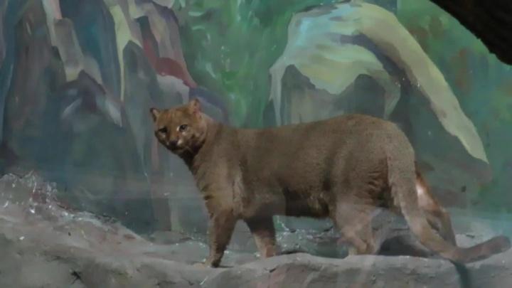 Чтобы не мёрзли: животных в Новосибирском зоопарке начали переселять в зимние вольеры