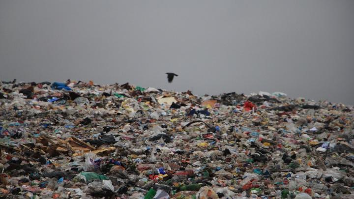 Импортное оборудование и местные паромы: власти планируют сжигать мусор на Бревеннике и Кегострове