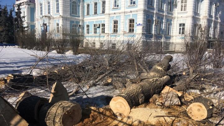 У главного корпуса аграрного университета Северного Зауралья на Республики спилили деревья