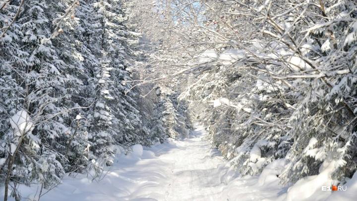 Уральские лесники открыли сезон охоты на похитителей новогодних елей и сосен
