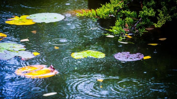 Волгоградский дождь в деталях: намокшая, но не исчезнувшая красота