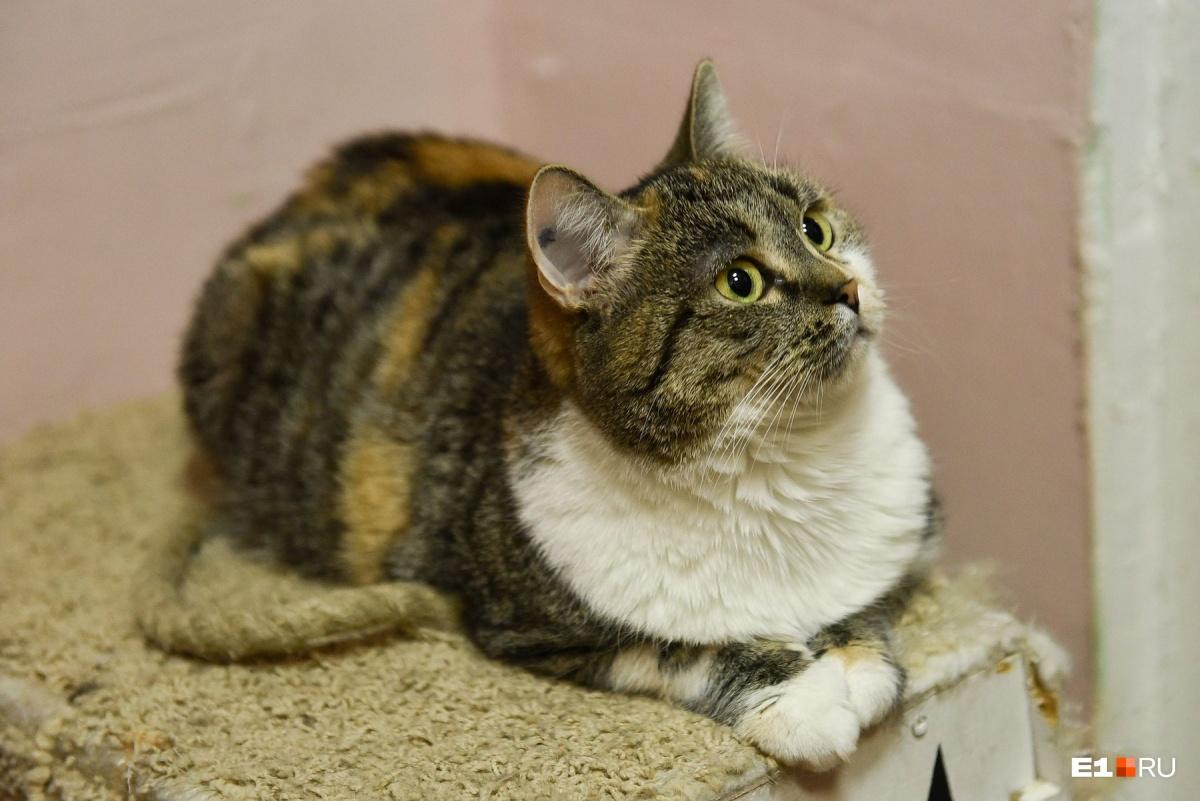 Толстый кот — это потенциальные проблемы со здоровьем. Если вы не можете прощупать у своего кота ребра, значит, лишний вес есть