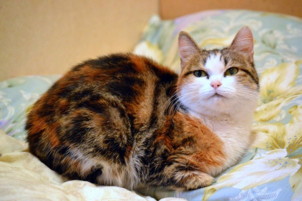 Кошка Радуга — участница выставки