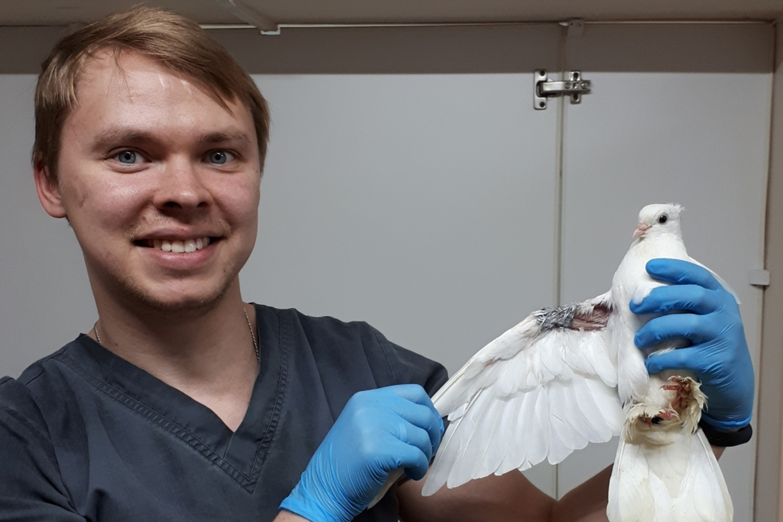 Теперь голубь может махать крылом