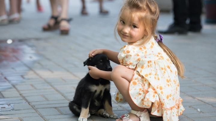 Путь до дома: в центре Волгограда выбрали хозяев для бездомных животных