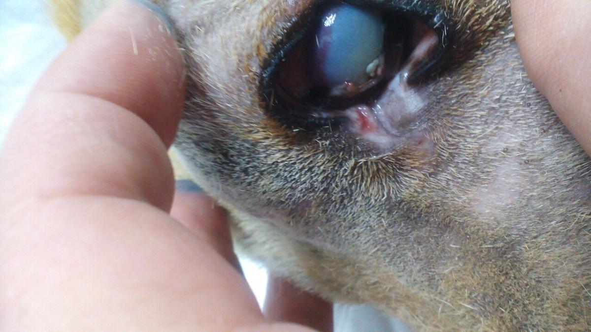В Кстове догхантеры расстреляли привязанного пса