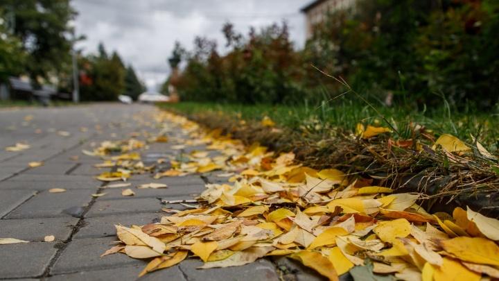 Бабье лето: В Волгоградской области в начале недели +20 ºС и без дождей