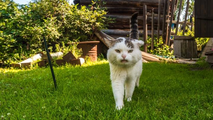 Ворвались в кадр: коты, псы и пони-очаровашка, которые случайно попали в репортажи НГС