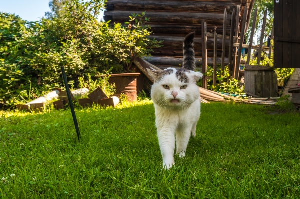 Кот Сева живёт на острове Кудряш