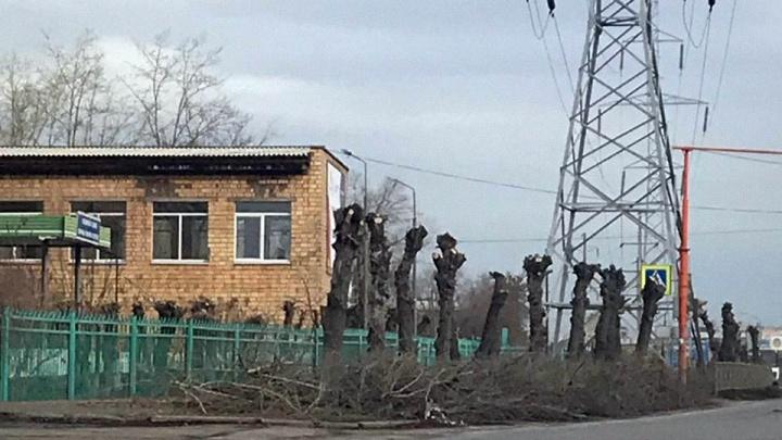 По 60 лет Октября десятки деревьев обрезали под столбы. Под топор попали даже яблони