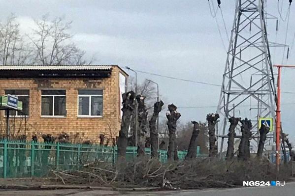 Все деревья под ЛЭП срублены