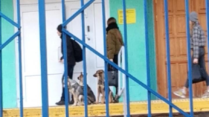 «Выйдем на митинг-акцию»: на крыльце волгоградской школы бродячие собаки терроризируют детей